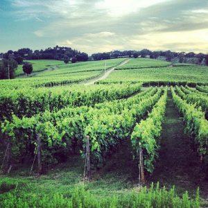 azienda-vinicola